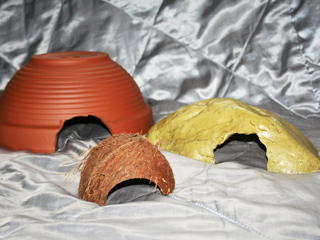 Various hides that are suitable for a Hognose Snake