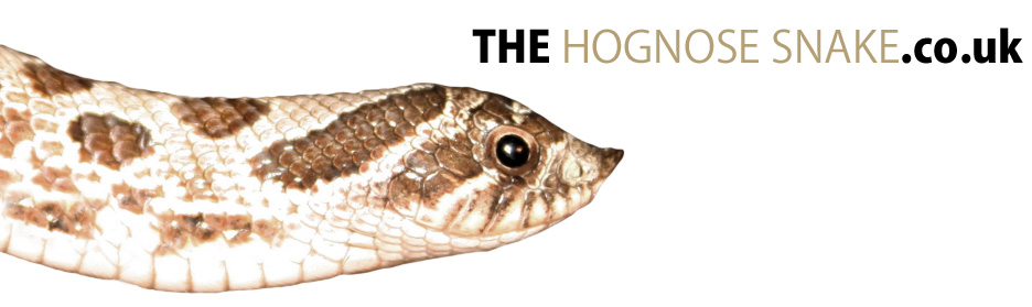 The Hognose Snake - The place to find Hog Nose Snake information on the internet!